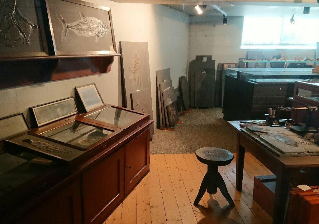 Holzmaden Museum Hauff